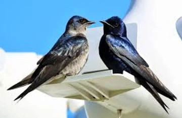 two birds sitting on a plastic perch